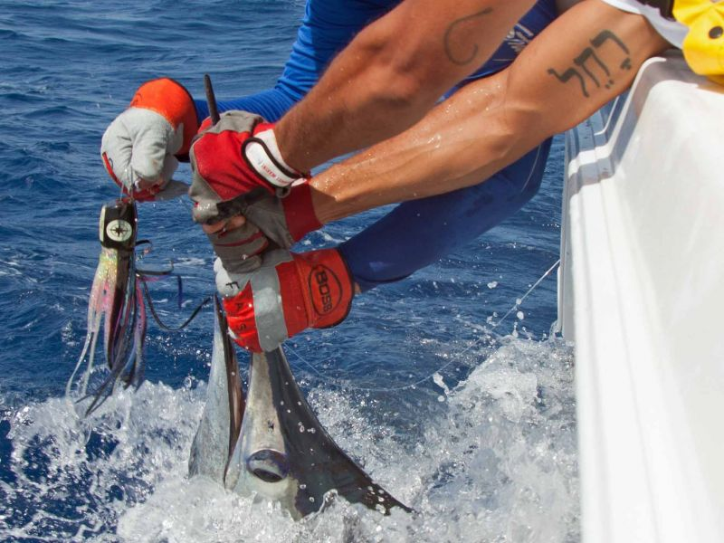 Billfish Tournament de Saint-Martin